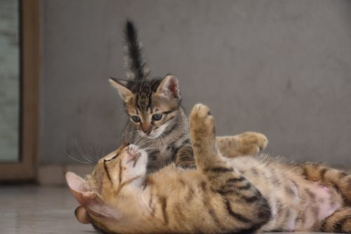 The Best Way to Introduce a New Kitten to Your Cat, According to Vets