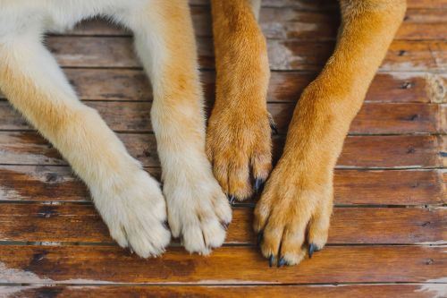 If Your Dog Is Biting Their Nails, It Might Be Time For a Trip to the Vet