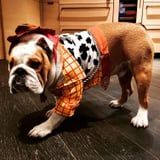 Chrissy Teigen Dressed Her Dog as Woody From Toy Story, and Luna Loves Her Little Sheriff